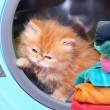 Red kitten in open washing machine — Stock Photo
