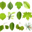 Collection green tree leaves, high resolution, isolated on white — Stock Photo #26646187