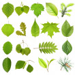 Collection green tree leaves, high resolution, isolated on white — Stock Photo
