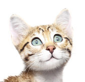 Cute kitten looking up on a white background — Stock Photo
