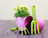Flowers in pot and garden tools. — Stock Photo