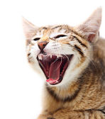 Cute happy cat. — Stock Photo