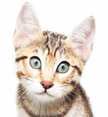 Cute sadly kitten. — Stock Photo