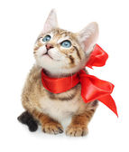 Kitten looking up with red bow on a white background — Stock Photo