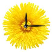 Dandelion flower - clock isolated on white background. — Stock Photo