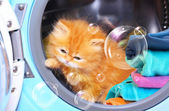 Red kitten and soap bubbles in open washing machine. — Stock Photo