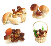 Set Boletus Edulis mushrooms isolated on white background — Stock Photo