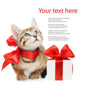 Kitten looking up with red bow and present box on a white backgr — Stock Photo