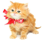 Red kitten with bow — Stock Photo