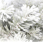Pine branch in snow. — Stock Photo