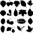 Stock Photo: Leaves silhouette