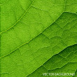 Stock Vector: Vector green leaf macro background.