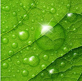 Vector water drops on green leaf macro background. — Stockvector