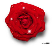 Vector red rose with water drops isolated on white background — Stock Vector