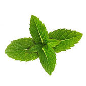 Green mint leaves. — Stock Photo
