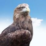 Eagle head close up — Stock Photo #27332505