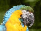 Parrots head close up — Stock Photo