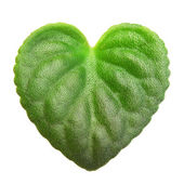 Green leaf heart shape. — Stock Photo