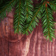 Stock Photo: Christmas pine tree branch