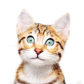 Cute kitten looking up. — Stock Photo