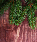 Christmas pine tree branch — Stock Photo
