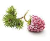 Raspberry branch isolated — Stock Photo