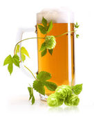 Glass of beer and hop — Stock Photo