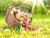 Röda äpplen i halm korg. — Stockfoto