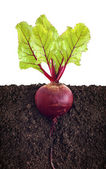 Beetroot with leaves — Stock Photo