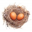 Eggs in nest isolated — Stock Photo