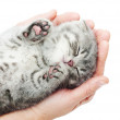 Sleeping kitten on hand — Stock Photo #33096317