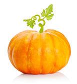 Pumpkin vegetable isolated — Stock Photo