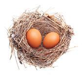 Eggs in nest isolated — Stock Photo