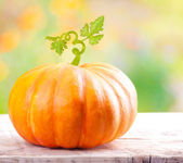 Pumpkin vegetable — Stock Photo