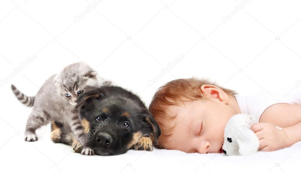 Baby kittens and puppies
