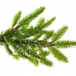 Pine tree branch — Stock Photo #35708569