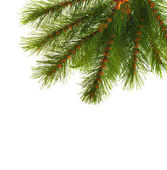 Artificial pine tree branch — Stock Photo