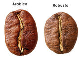 Black arabica, robusta coffee bean — Stock Photo