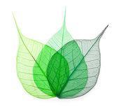 Macro green leaves — Stock Photo