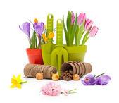 鍋と庭のツールの花 — ストック写真