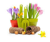 Flowers in pot and garden tools — Stock Photo