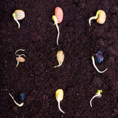 Pile of different seeds growing — Stock Photo