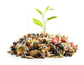 New plant from pile of different seeds growing — Stock Photo