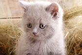 Kot na tło wiejski. — Zdjęcie stockowe