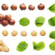 Forest hazelnuts isolated — Stock Photo #50695859