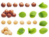 Forest hazelnuts isolated — Stock Photo