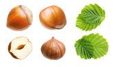 Forest hazelnuts isolated — Stock Photo