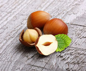 Forest nuts hazelnuts — Stock Photo