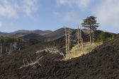 Trees destroyed by the lava flow — Stock Photo