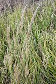 Fundo de grama verde e seco — Foto Stock